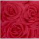 Обои В58к6 Розы-07 188-07 (Пенза) (9)