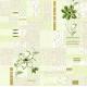 Обои П319 гр.3 Ленок 04  0.53х10 (Саратов) (12)